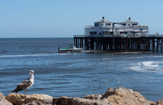 Malibu Pier with a seagull in the foreground