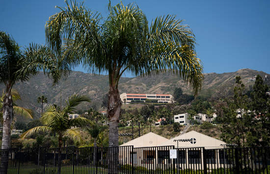 a Palm tree on the Pepperdine Malibu campus with the School of Law visible in the background